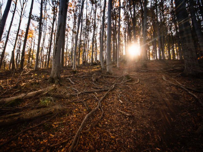 Ansicht eines Waldes bei Sonnenaufgang.