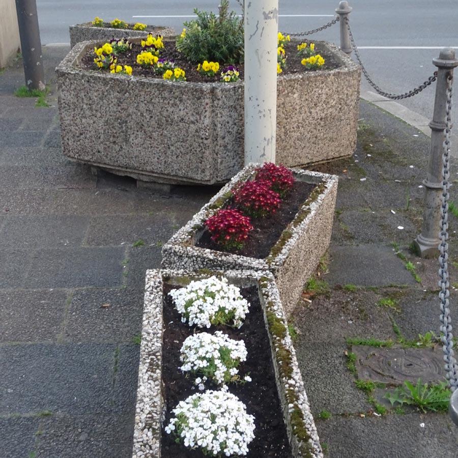 Die bepflanzten Blumenkübel auf der Kaiserstraße
